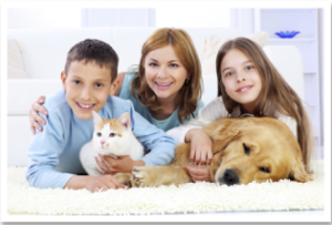 Chem-Dry's pet urine removal treatment completely destroys odour from carpets and rugs - image