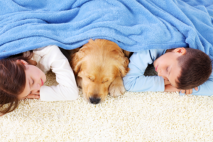 Experienced Bunbury & Busselton carpet cleaners follow a safe cleaning process for a truly clean and fresh home - image