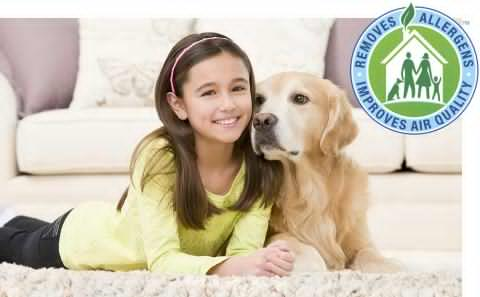 Experienced Bunbury carpet cleaners lift allergens and bacteria from carpets, area rugs and upholstery - image